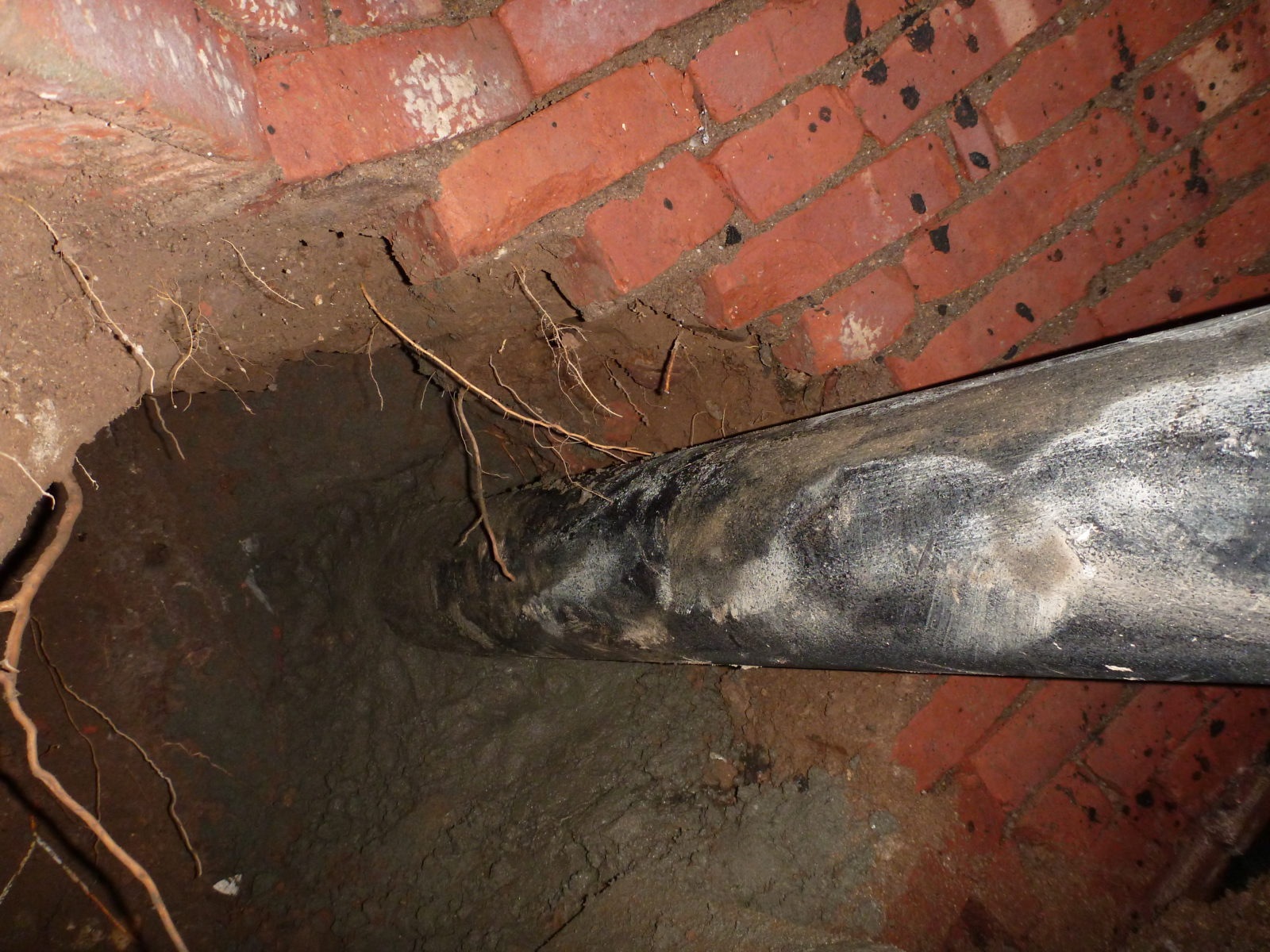 Root intrusion leads to sewer pipe repair harris water main